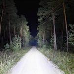 Lupine_Alpha_Frontlicht__35mm[1920×1920] (7)